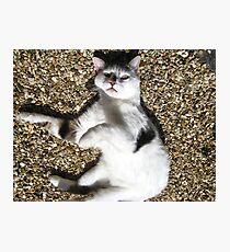 Scarey Cat Photographic Print
