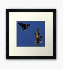 Flight Of The Starlings Framed Print