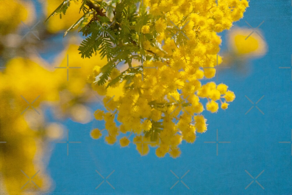Wattle 2 by Deborah McGrath