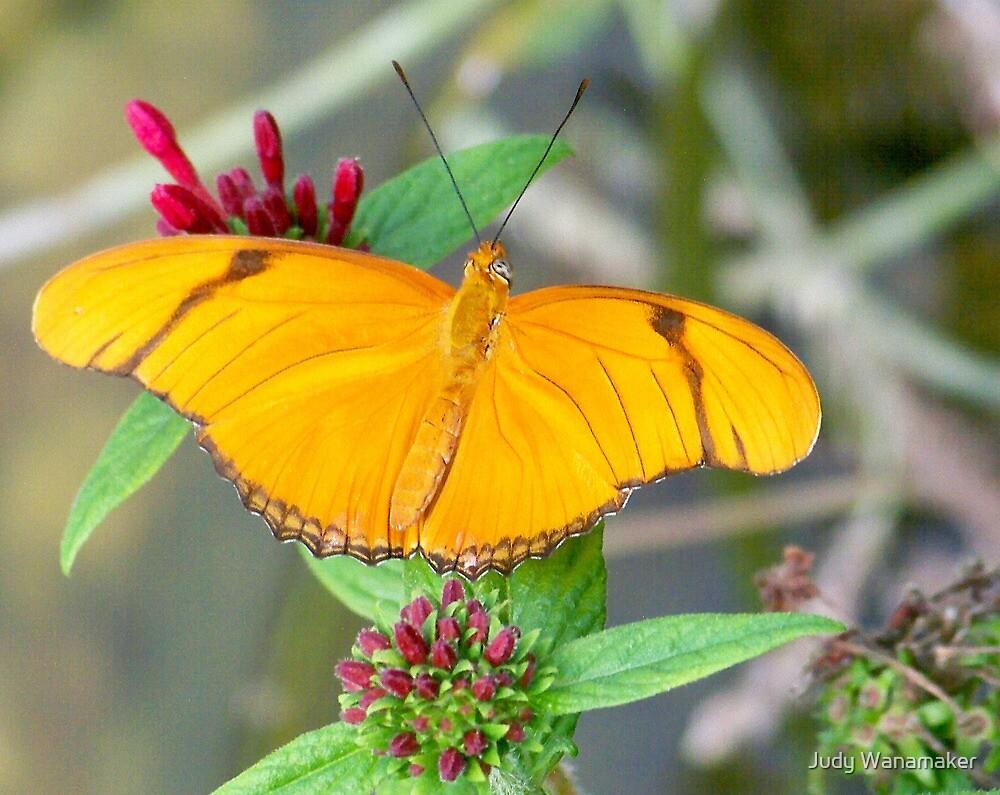 Golden Julia Butterfly by Judy Wanamaker