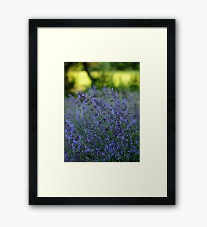 Blooming Heather Framed Print