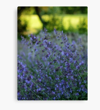 Blooming Heather Canvas Print