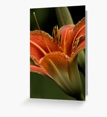 In The Spotlight - Daylilly Greeting Card