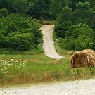 On the Back Roads of Arkansas by Susan Blevins