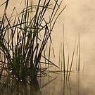 Misty Morning by Gary  Davey (Jordy)