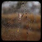 Bush Spider by VigourGraphics