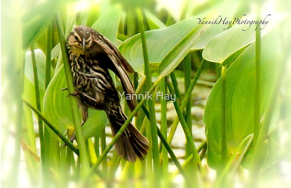 Small marsh bird by Yannik Hay