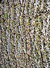 Mossy Walnut Bark by MarjorieB