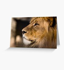 Lion - Adelaide Zoo Greeting Card