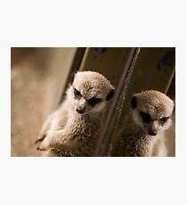 Meerkat Refection Photographic Print