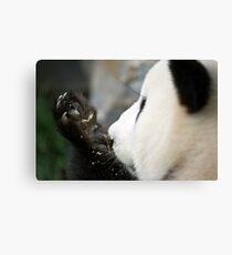 Funi - Adelaide Zoo Canvas Print