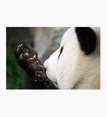 Funi - Adelaide Zoo Photographic Print