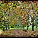 Corridor of Oaks I by Mark Moskvitch
