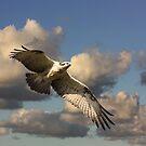 Enveloping Wings by byronbackyard