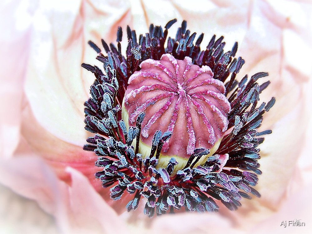 Poppy Pollen Pockets by Aj Finan