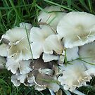 Fungus Foto by sarnia2