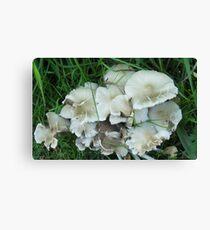 Fungus Foto Canvas Print