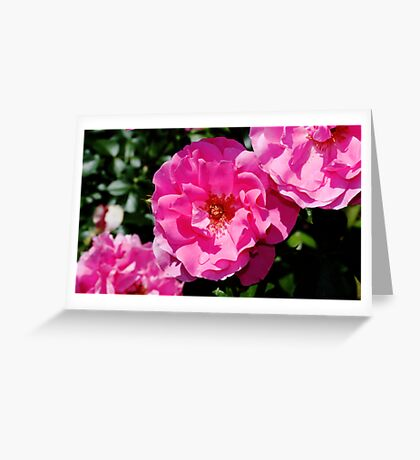 Rose Bush Greeting Card
