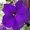 Something Purple