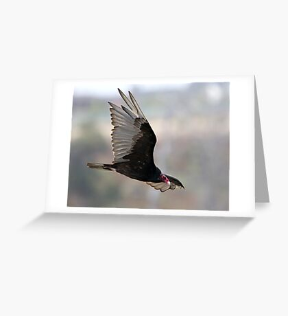Turkey Vulture In flight Greeting Card