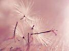 wish. by Angel Warda