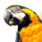 What's Up - Macaw parrot at birdworld Kuranda. by Jenny Dean