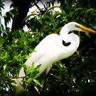 louisiana egret by leapdaybride
