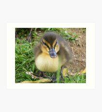 spring baby - Mallard Duckling Art Print