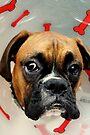 Nicht glücklich - Boxer Dog Series von Evita