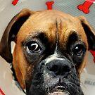 «No Feliz - Serie Boxer Dog» de Evita