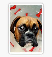 Nicht glücklich - Boxer Dog Series Sticker