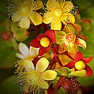 St. John's Wort by AndyReeve