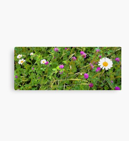 White Dasies and Red Clover Canvas Print