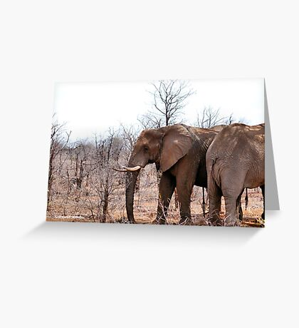 THE AFRICAN ELEPHANT – Loxodonta Africana - IN PROFILE, REAR AND FRONT! Greeting Card