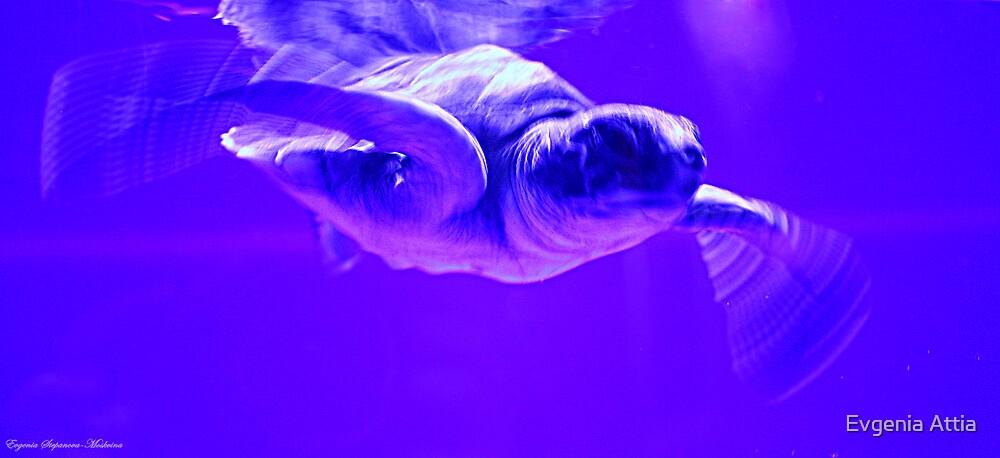 Sea turtle by Evgenia Attia