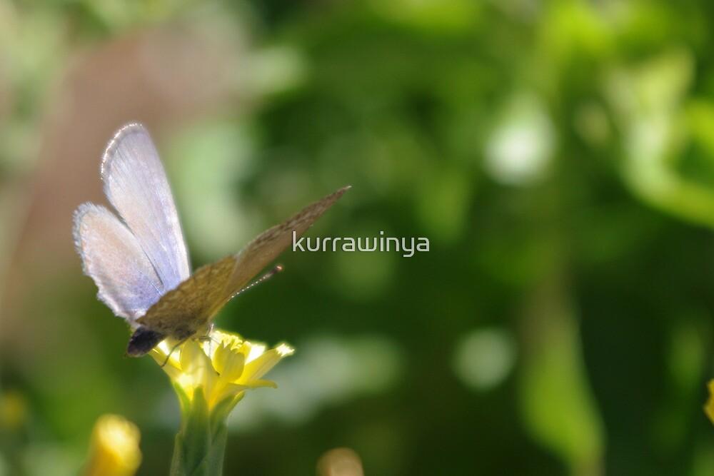 Dusty Purple Butterfly by Penny Kittel