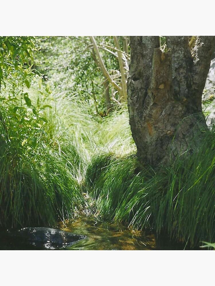 river bank. by chirpofjoy