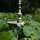 Botanical gardens sydeny by Marius Brecher