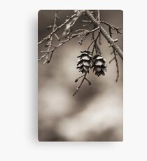 Coniferous Couple Canvas Print