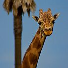 Hello There by Justin Baer