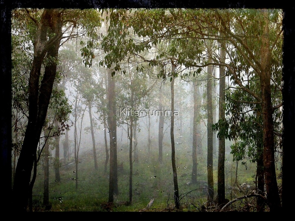 Eucalypts in the Mist by Kitsmumma