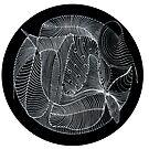 Fish Mandala by MandalaByChelle