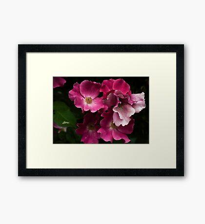 Florals Framed Print