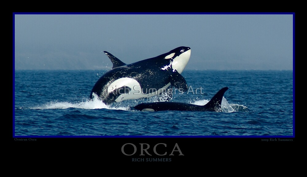 Orca Poster by Rich Summers