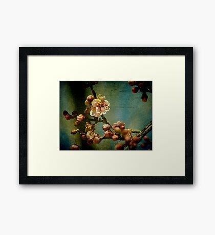 Hint of Spring Framed Print