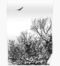 Hawk hunt Poster