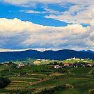 Stürmischer Tag in den Weinbergen von Brda, Slowenien von zakaz86