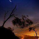 «Noches de Tasmania.» de Alex Preiss