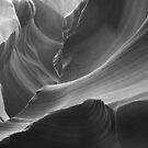 Antelope B/W by Steve  Taylor