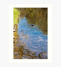 Downward Duck in Swirly Waters Art Print